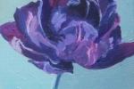 Purple Tulip ll