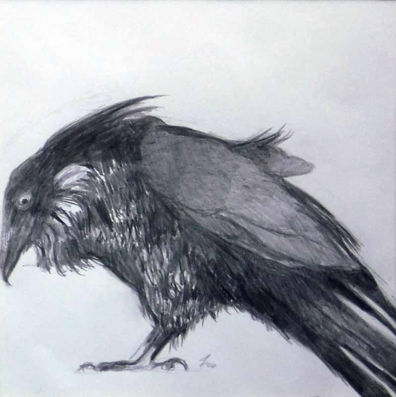 Raven l
