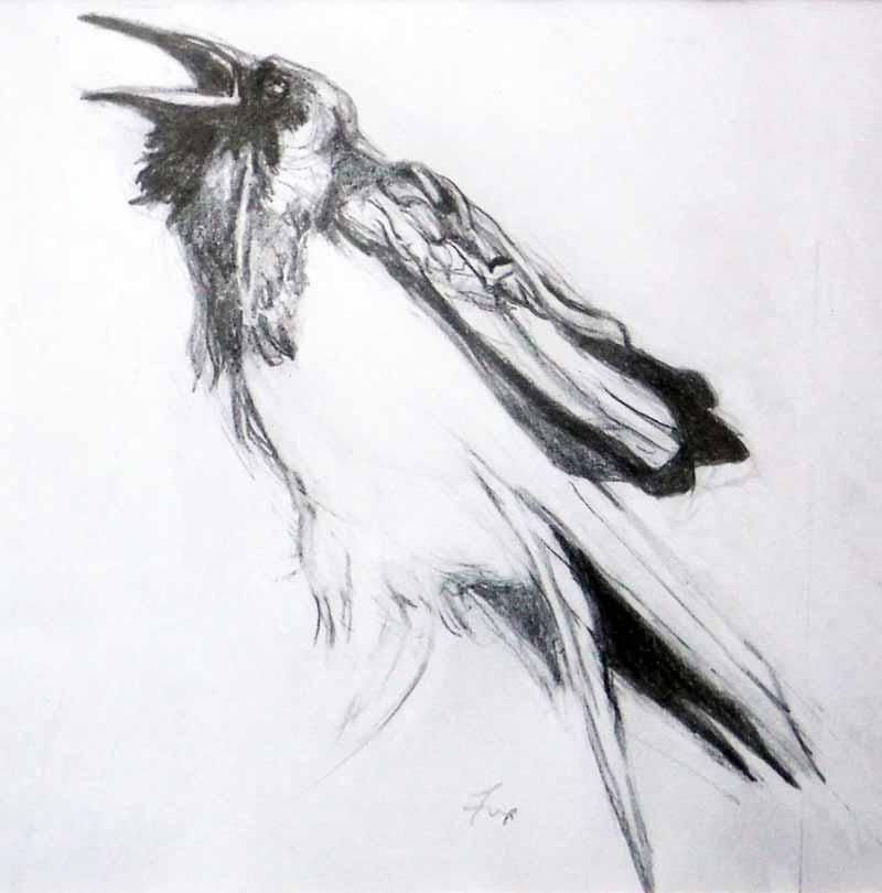 Raven ll