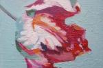 Rembrandt Tulip lX