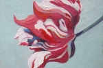 Rembrandt Tulip l