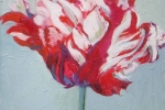 Rembrandt Tulip V